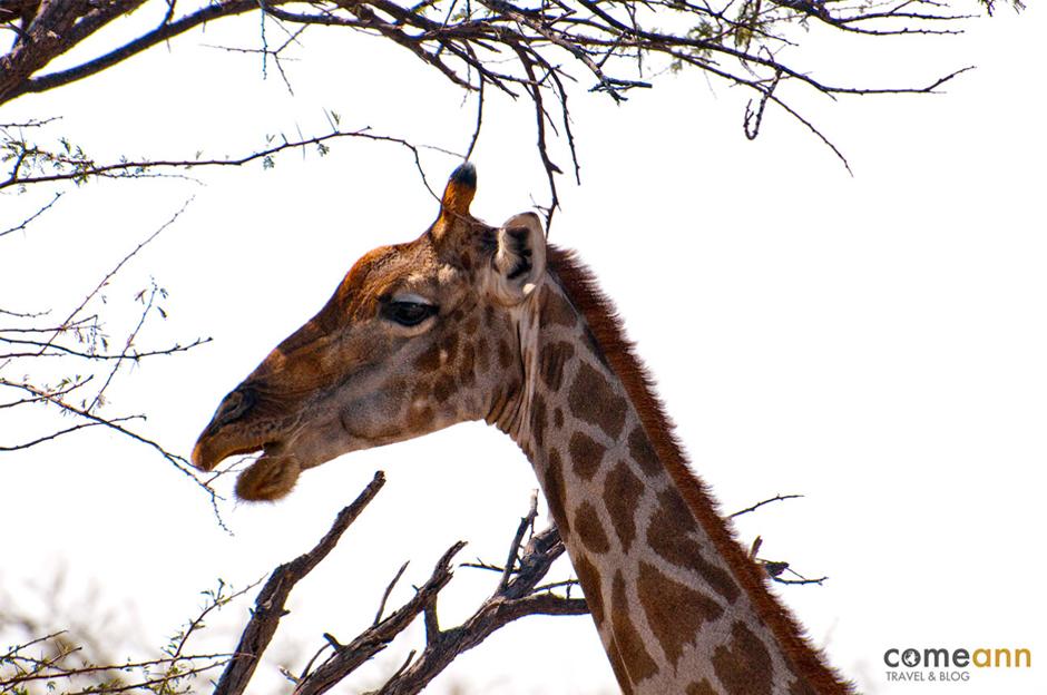 Namibia to królestwo dzikich zwierząt