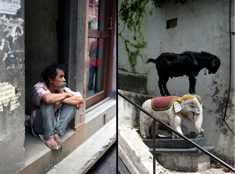 Nepal. Mieszkaniec Katmandu i koza na słoniu.