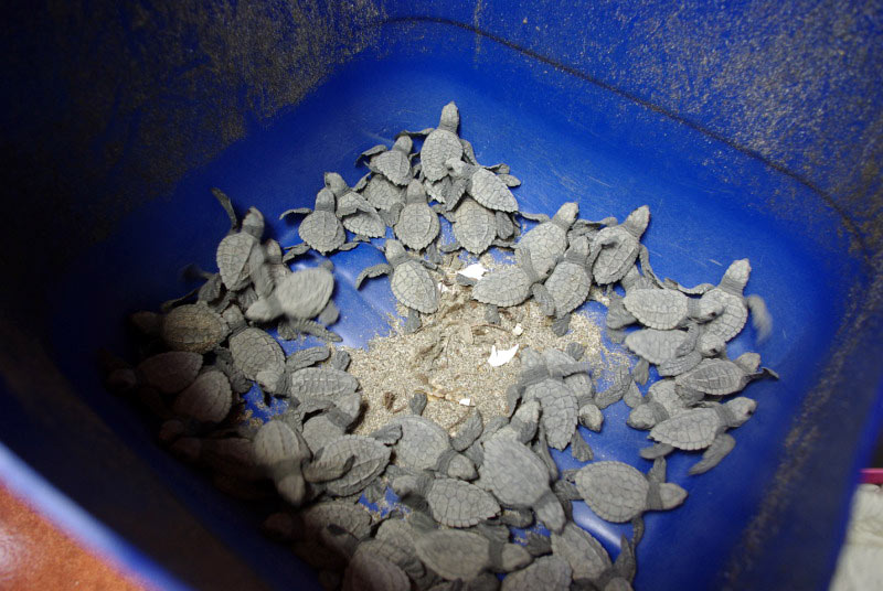 Nikaragua, narodziny żółwi