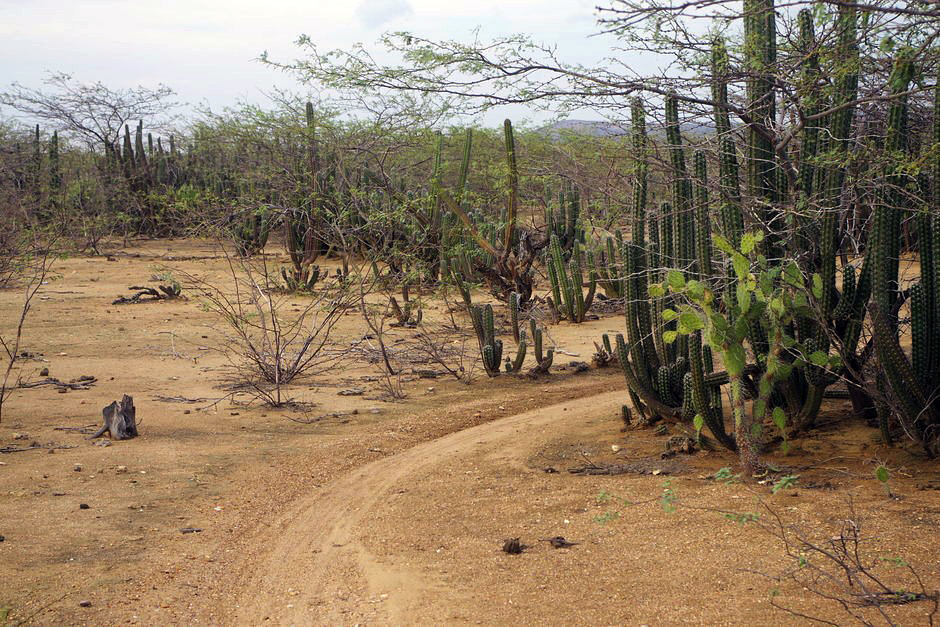 Jeszcze jeden kaktus na pustyni