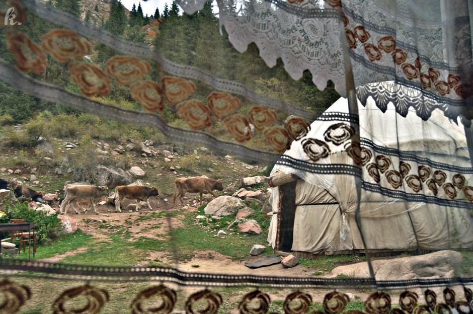 Nocleg w jurcie to atrakcja turystyczna Kirgistanu