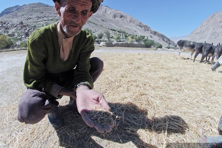 Rolnictwo w Afganistanie - foto