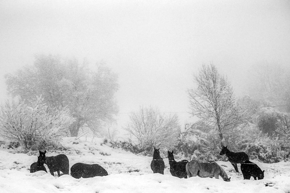 Konie w zimie - Pireneje