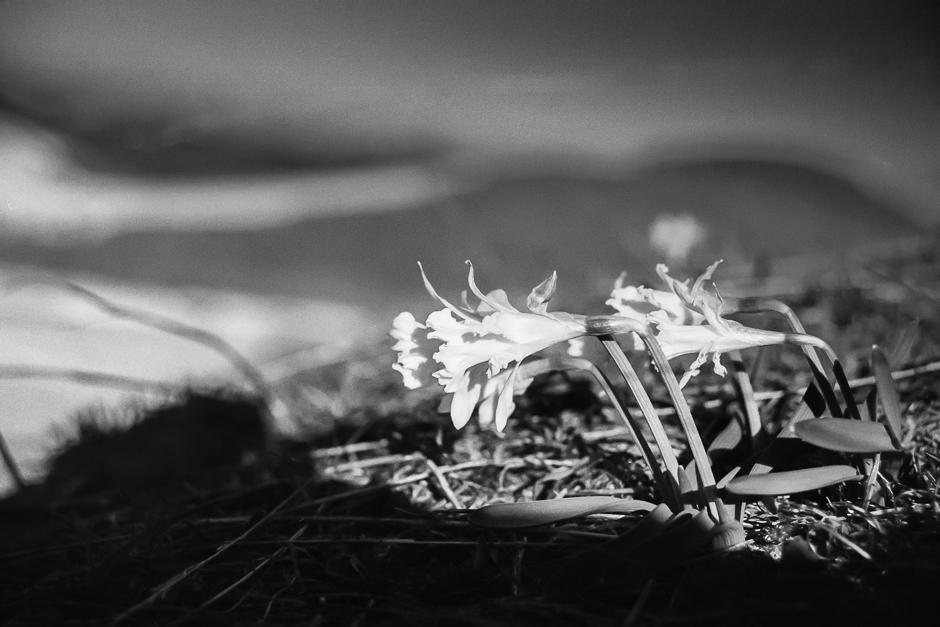 Kwiecień w hiszpańskich Pirenejach - zdjęcia