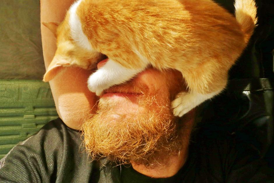Strzeżysz i rudy kot