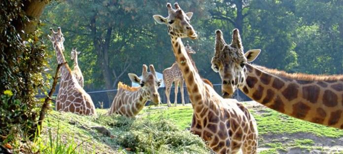 Imagen: Zoológico de Chapultepec