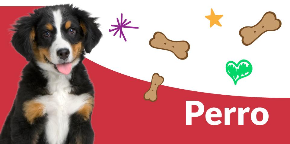 Productos para perro