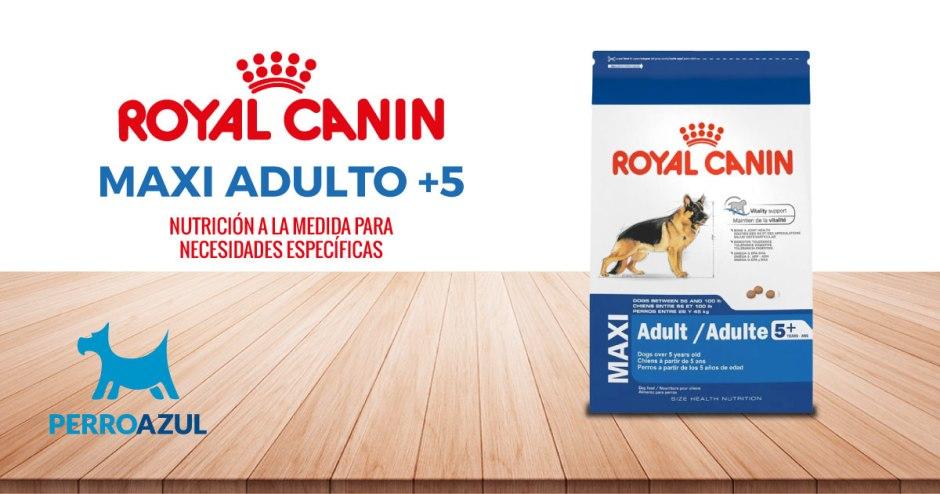 Croquetas para Perro Royal Canin Maxi Adulto +5 Senior