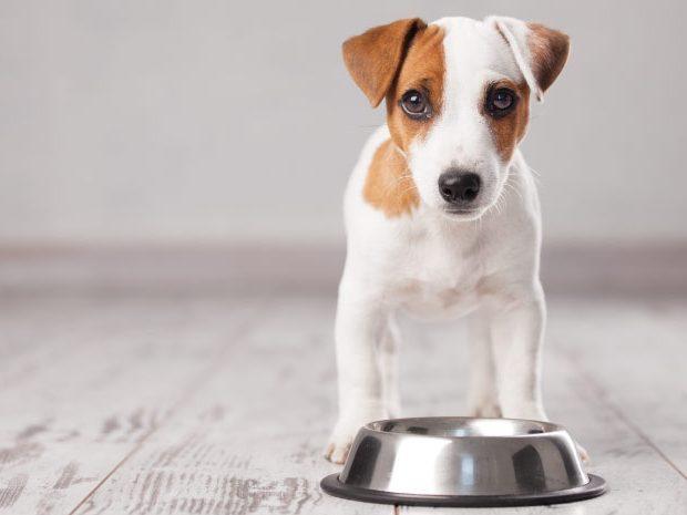 Alimento para cachorro, ¿cuál es el mejor?