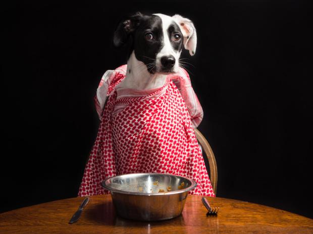 ¿Qué debe contener el alimento de mi perro?