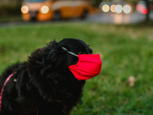 Los perros y el COVID-19