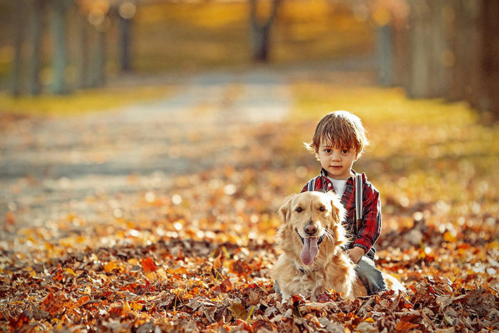 Cute Boy And Girl Kissing Wallpaper Perros Cuidando De Beb 233 S Perros Amigos