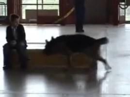 """alt=""""exhibición perro de rescater"""""""