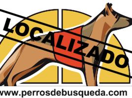 """alt=""""Localizado Perrosdebusqueda"""""""