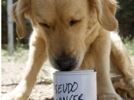 "alt=""perros detectores cáncer España"""