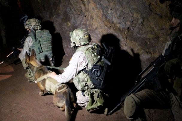 """alt=""""unidad canina combate ambiente subterráneo"""""""