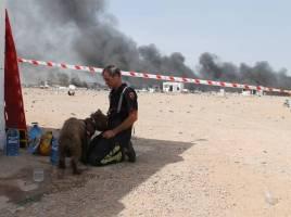 "alt=""perros rescate explosión pirotecnia Zaragoza"""