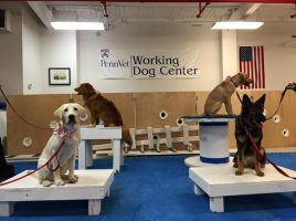 Penn Vet Working Dog Center