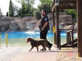 Campus de Trabajo con Perro