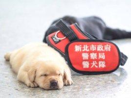 cachorros de la policía