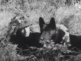Perros de guerra