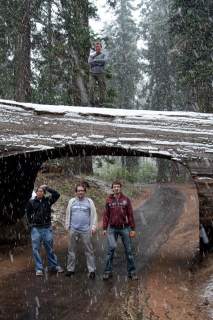 Tunnel Log, una secuoya caída sobre una vía vehicular a la cual le excavaron un túnel, Parque Nacional de la Secuoyas, EE.UU.