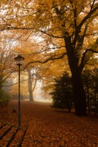 Un día de otoño y niebla en el parque municipal o Stadtpark de Bochum, Alemania