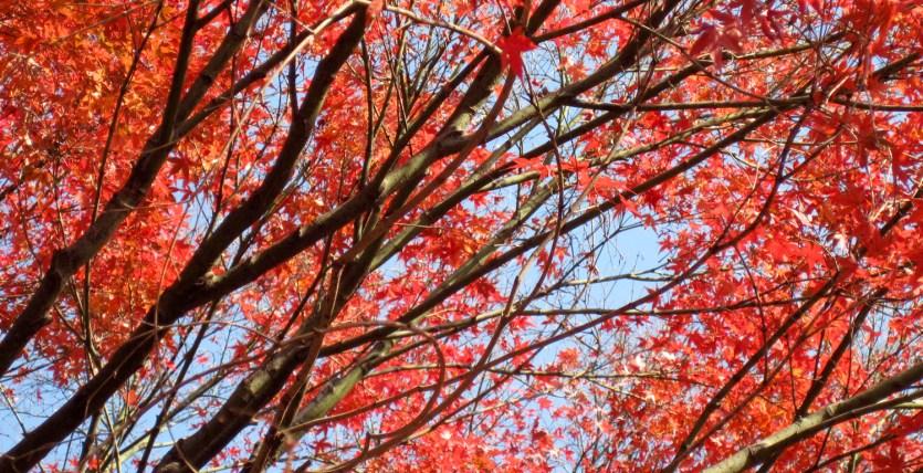 Otoño en el jardín del este del Palacio Imperial de Tokio, Japón