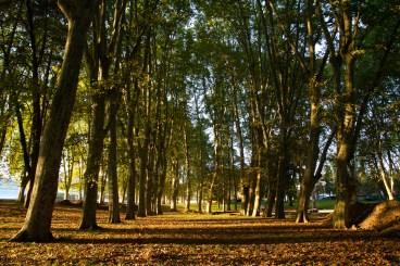 Jardín a orillas del río Doubs, Besanzón, Francia