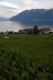 Viñedos, lago Léman y los Alpes, vistos desde Rivaz, Suiza