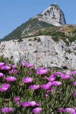 Flores y peñón de Gibraltar