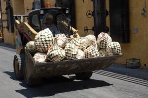 Tractor con piñas de agave, Tequila, México