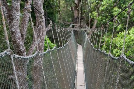 El Canopy Walk, una serie de puentes de cuerdas instalados entre los árboles de Penang Hill, en la isla malaya de Penang.