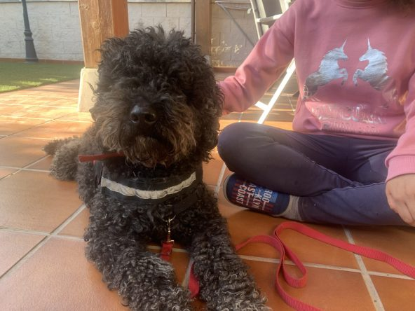 Azu - Perro de Terapia Perruneando Madrid