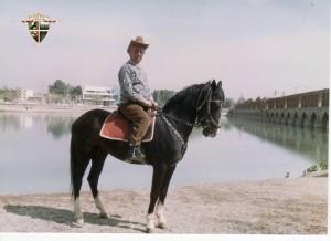 Mard, cavallo Turcomanno
