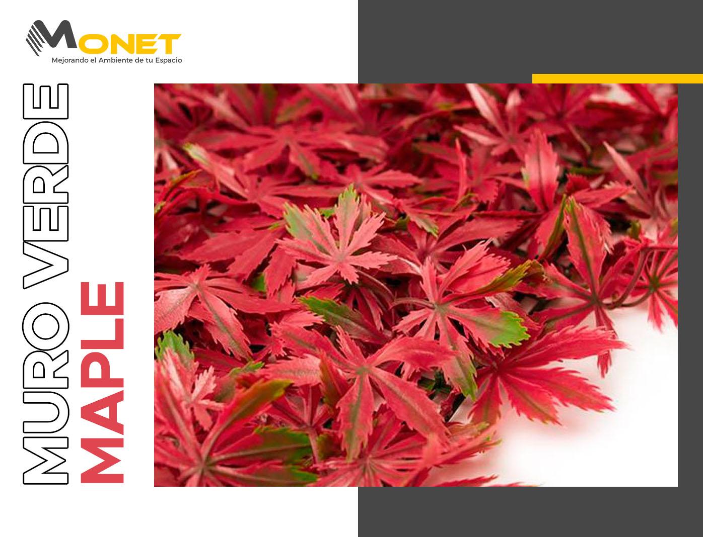Muro Verde Maple