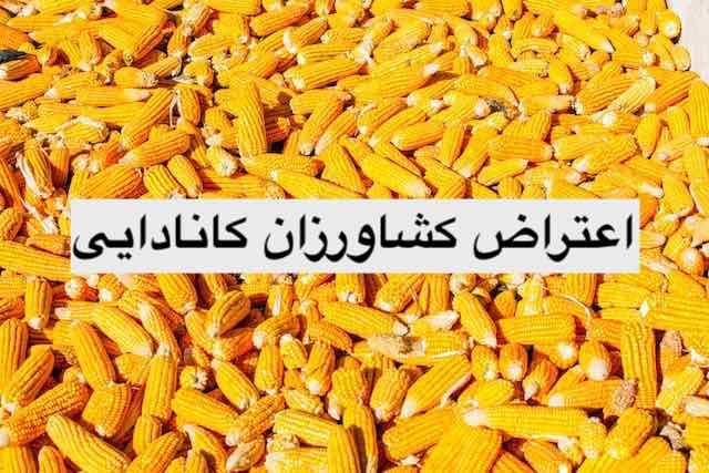corn farmers protest