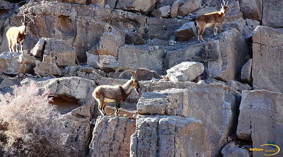 kolah-ghazi-national-park-1