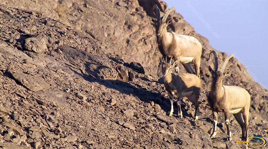 kolah-ghazi-national-park-4