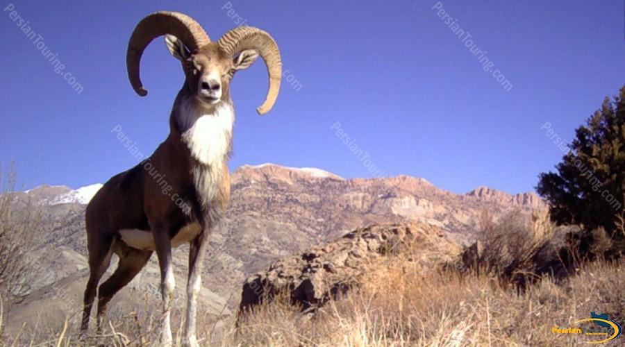 khojir-and-sorkhe-hesar-national-park-4