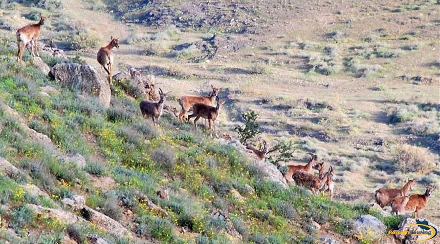 khojir-and-sorkhe-hesar-national-park-7