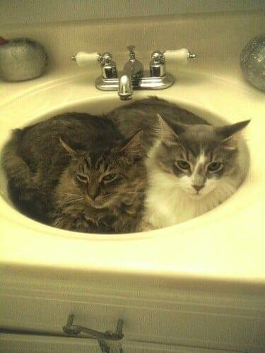 How I Know I'm a Crazy Cat Lady | Persnickety Plates #NutrishZeroGrain