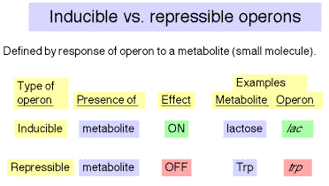 Image result for inducible and repressible operons
