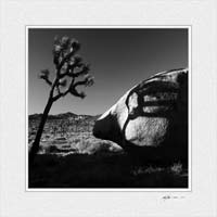Joshua Tree Shadow ©Gary Hayes 2005