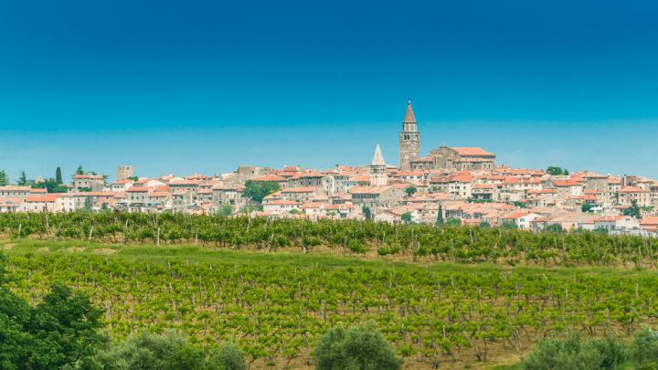 Sapori d'Istria: sardina uva e funghi