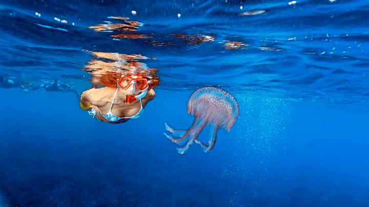 Dottore ma è vero che… L'urina neutralizza il veleno delle meduse?