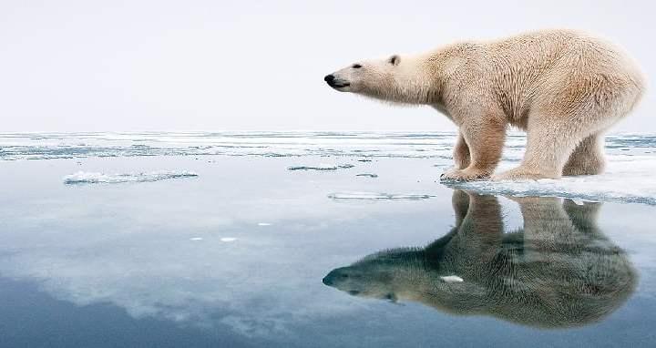 Grazie al Great White Bear Tours ci si sveglia al fianco di un Orso Polare