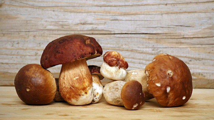 Come conservare i funghi freschi
