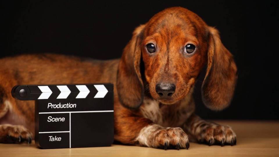 Dog Film Festival: la prima rassegna cinematografica e letteraria italiana dedicata al cane