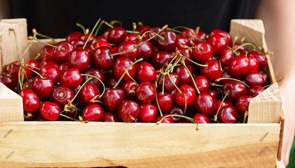 Scoppia il caso delle ciliegie pugliesi. A rischio la produzione